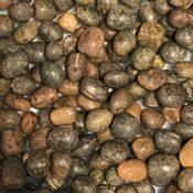 CommonVetchSeed-crop