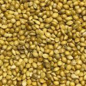 GermanMillet-crop